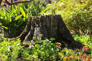 Stump Grinding Pasadena